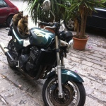 cats just arrived at the B&B Catania Globetrotter